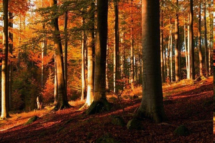Full Screen Desktop Fall Leaves Wallpaper Sunset Forest Fall Trees Leaves Hill Moss Shrubs