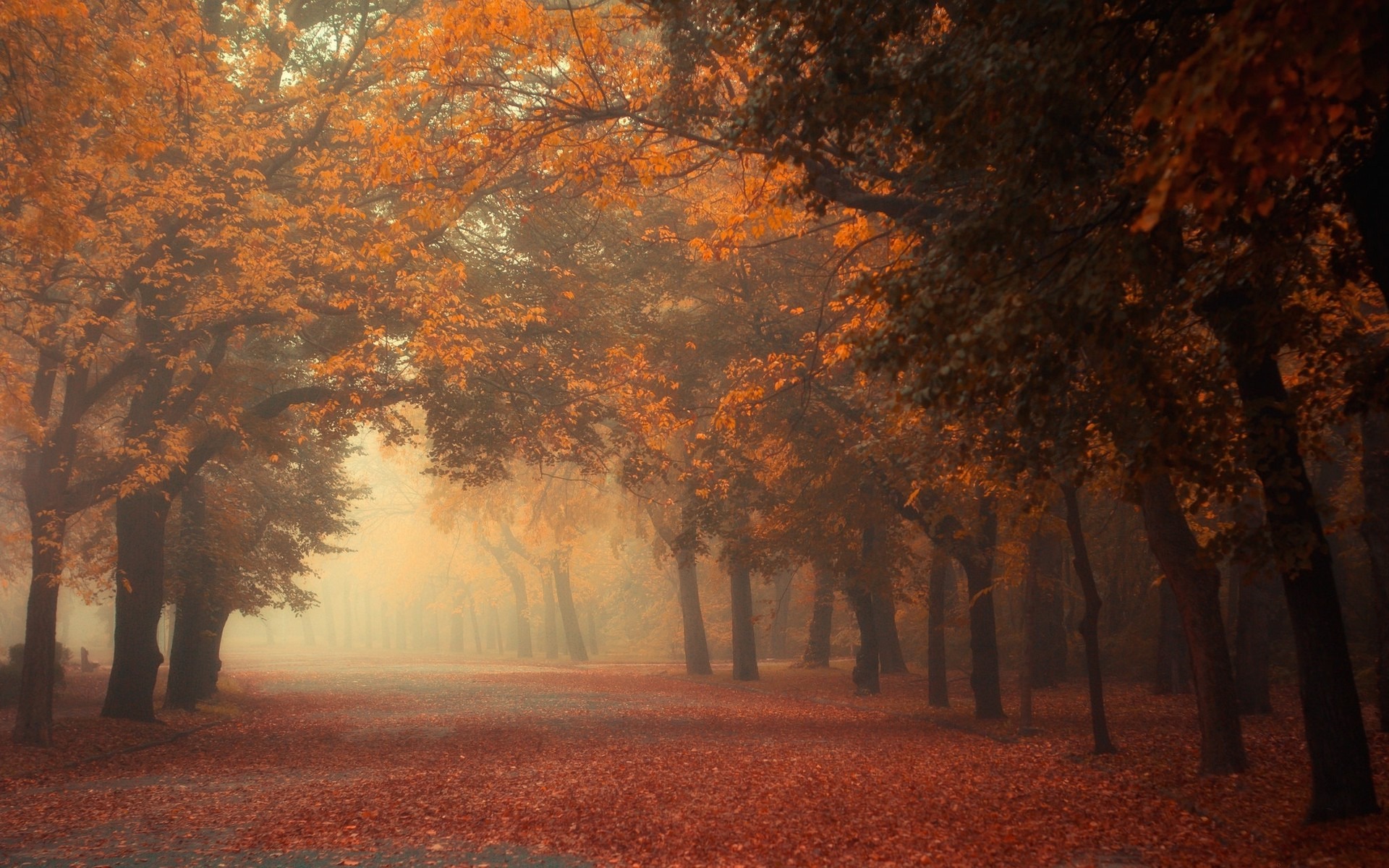 Desktop Wallpaper Fall Leaves Nature Landscape Fall Mist Trees Morning Park Road