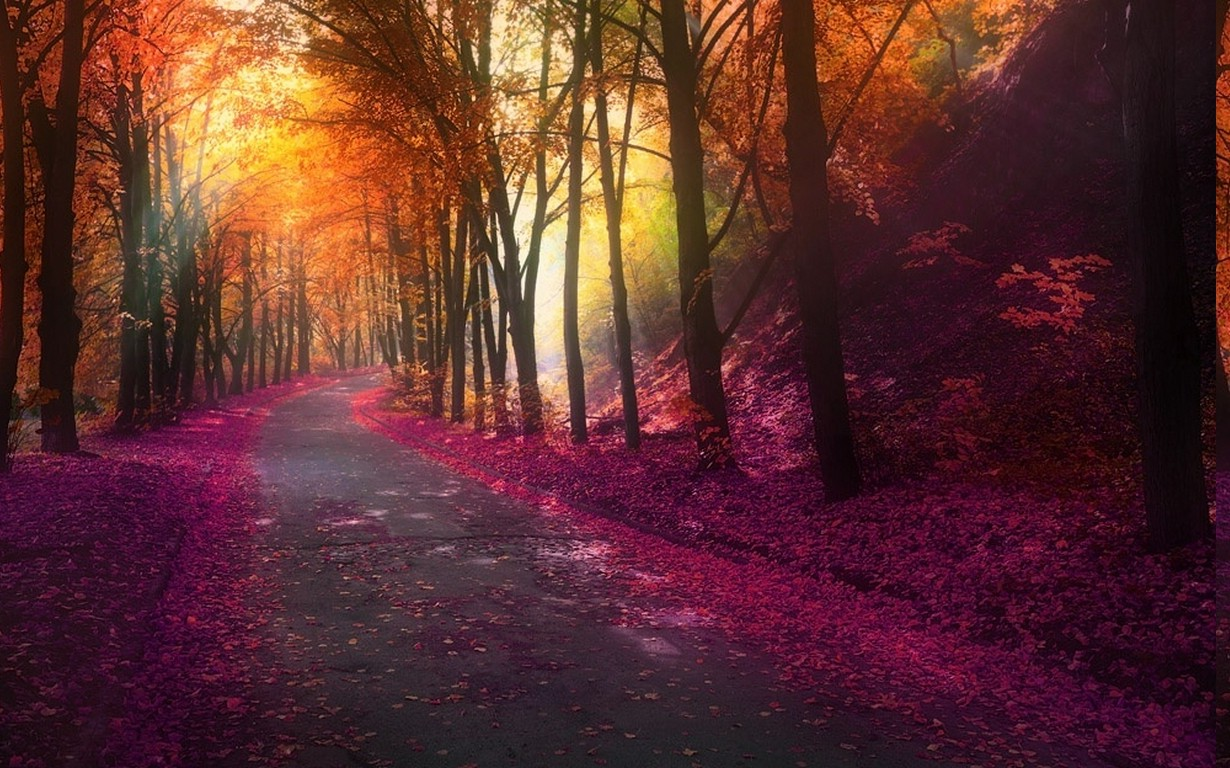 1280x800 Fall Hd Wallpaper Nature Fall Park Trees Colorful Landscape Leaves