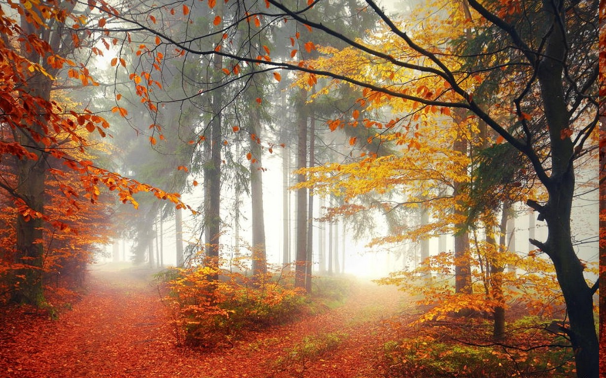 3d Fall Desktop Wallpaper Mist Landscape Nature Forest Morning Trees Lights