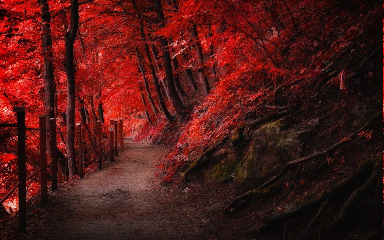 1280x1024 Fall Wallpaper Landscape Nature Fall Red Path Fence Mountain