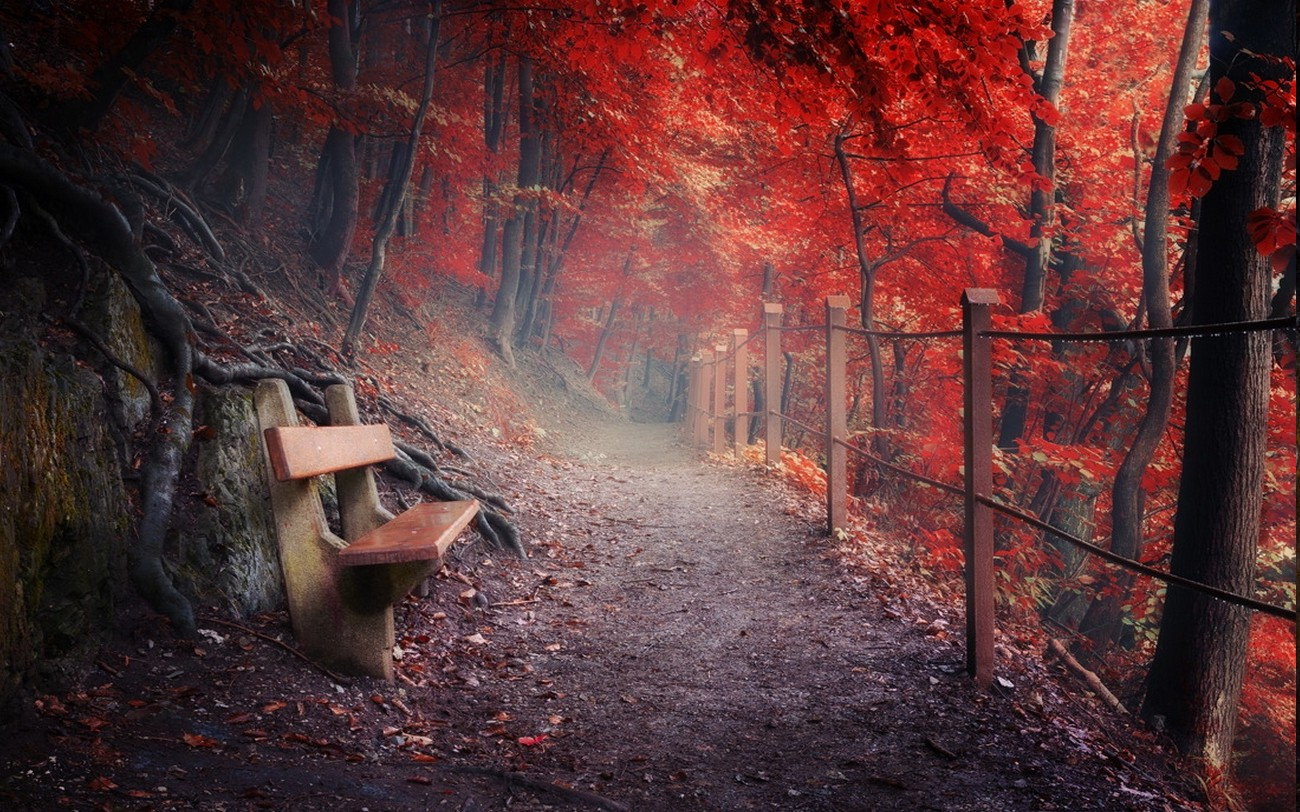 Beautiful Fall Wallpapers For Desktop Nature Landscape Fall Path Bench Fence Forest Roots