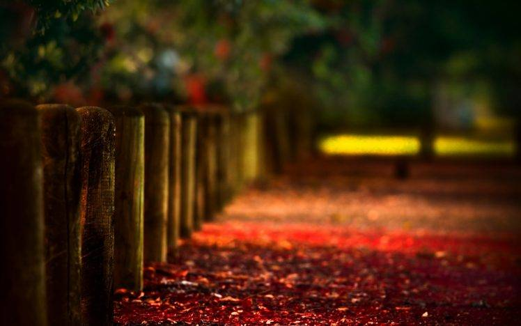 Fall Wallpaper For Windows 10 Path Blurred Fence Wood Depth Of Field Bokeh Leaves