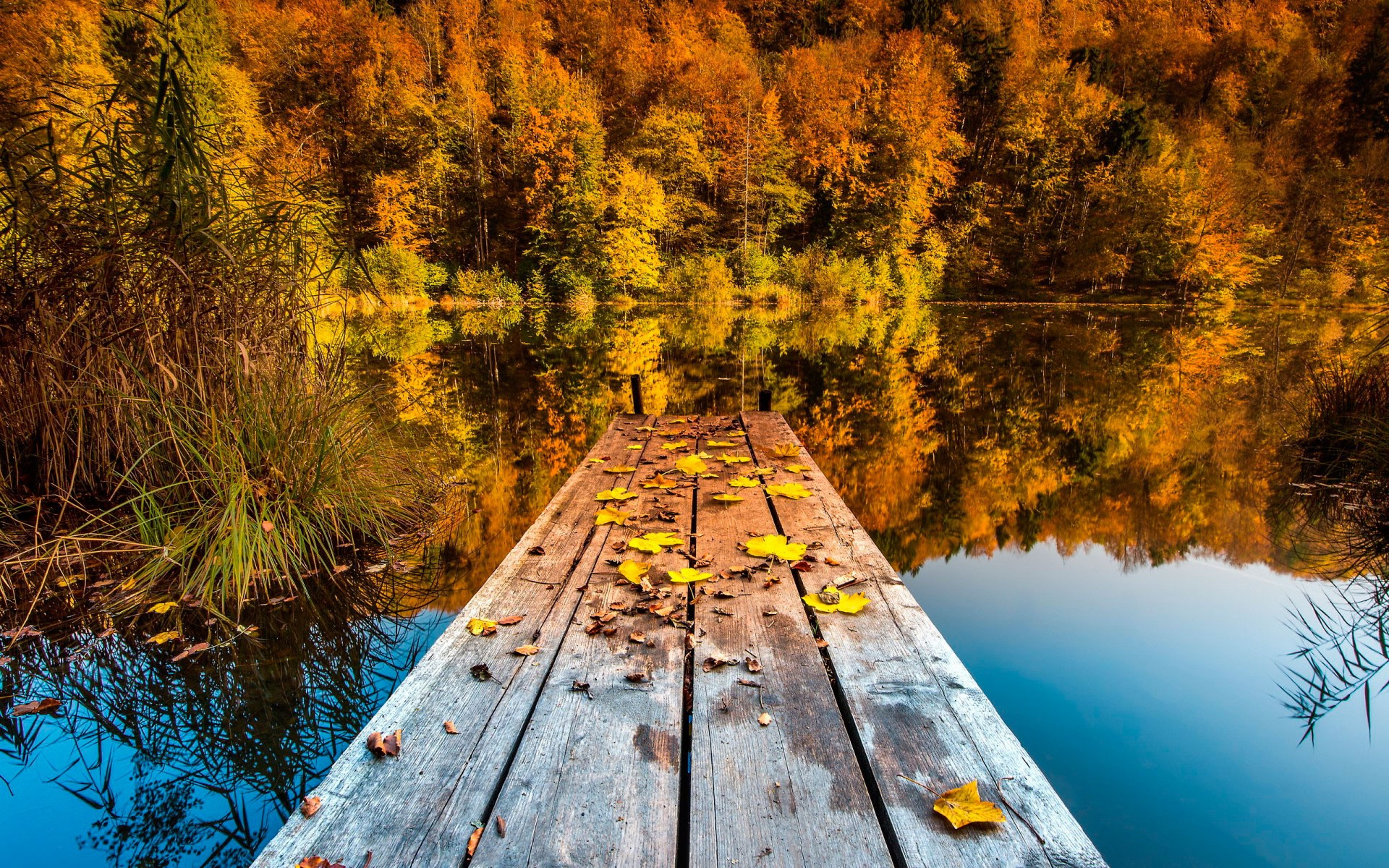 Full Screen Desktop Fall Wallpaper Nature Landscape Trees Pier Wooden Surface Forest