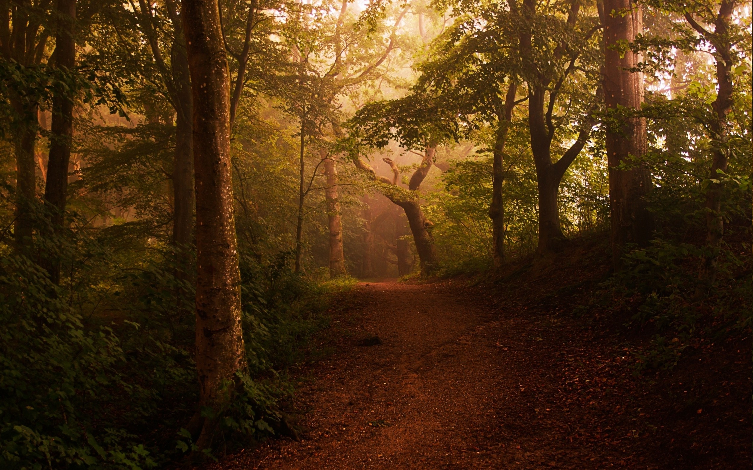 Free Fall Animal Wallpaper Landscape Nature Mist Forest Shrubs Path Leaves