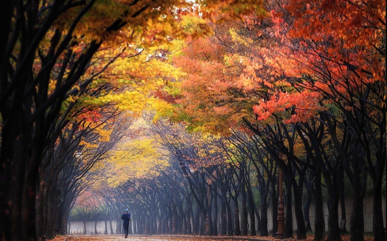 1280x800 Fall Wallpaper Nature Landscape Morning Fall Trees Park Colorful