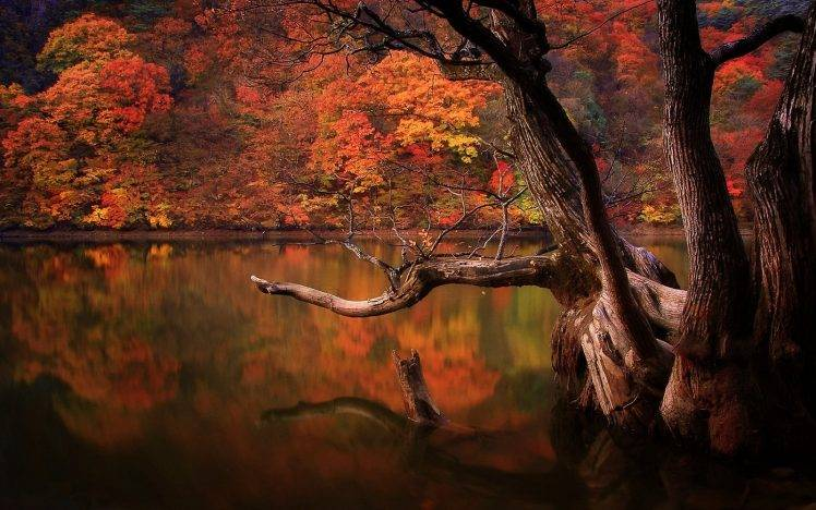 Broken Heart Quotes Wallpapers For Mobile Lake Fall Forest Dead Trees Reflection Nature South