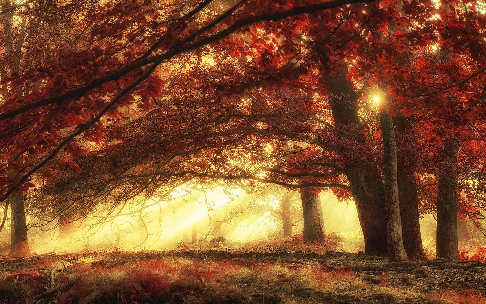 Fall Mobile Wallpapers Nature Landscape Sun Rays Forest Mist Fall Grass