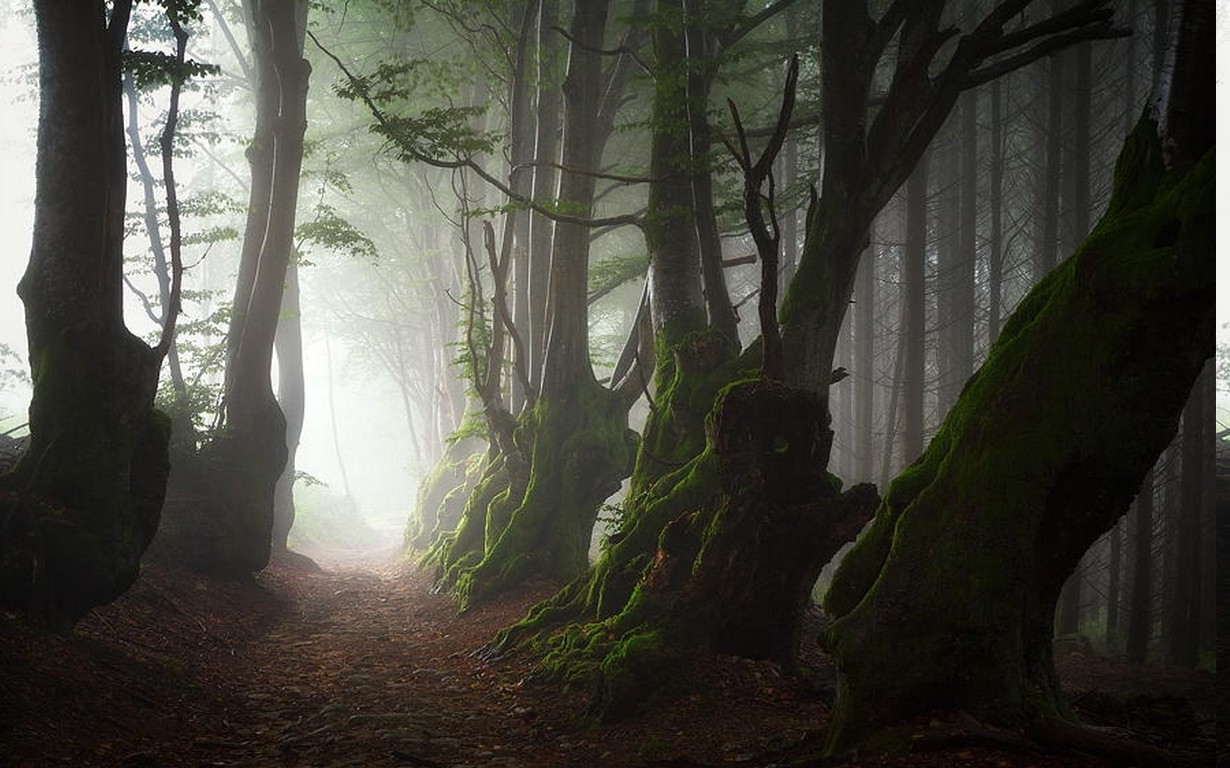 Wallpaper Hd Cars For Mobile Nature Landscape Mist Trees Path Roots Forest Moss