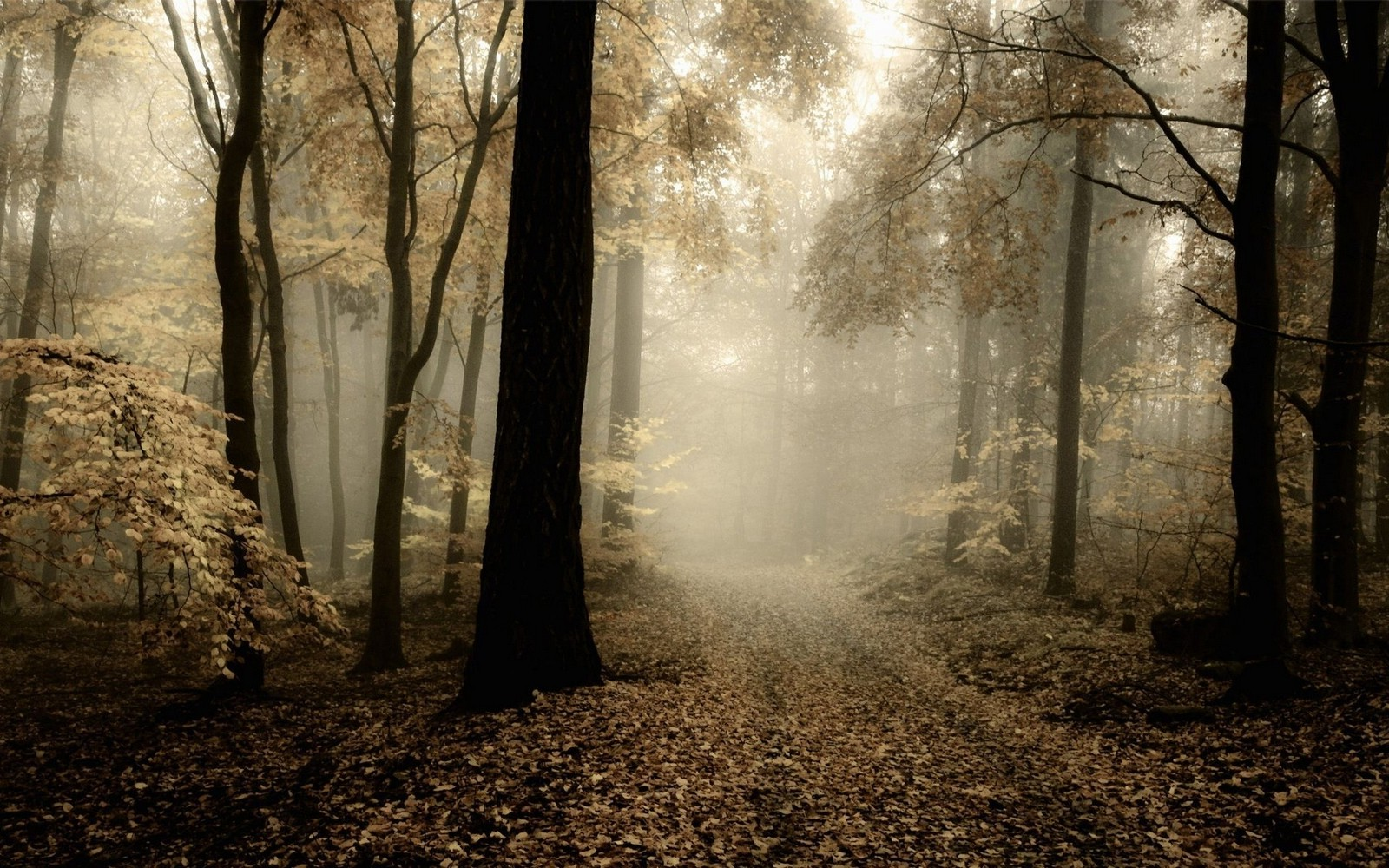 Fall Desktop Wallpaper Full Screen Nature Landscape Forest Mist Path Leaves Fall
