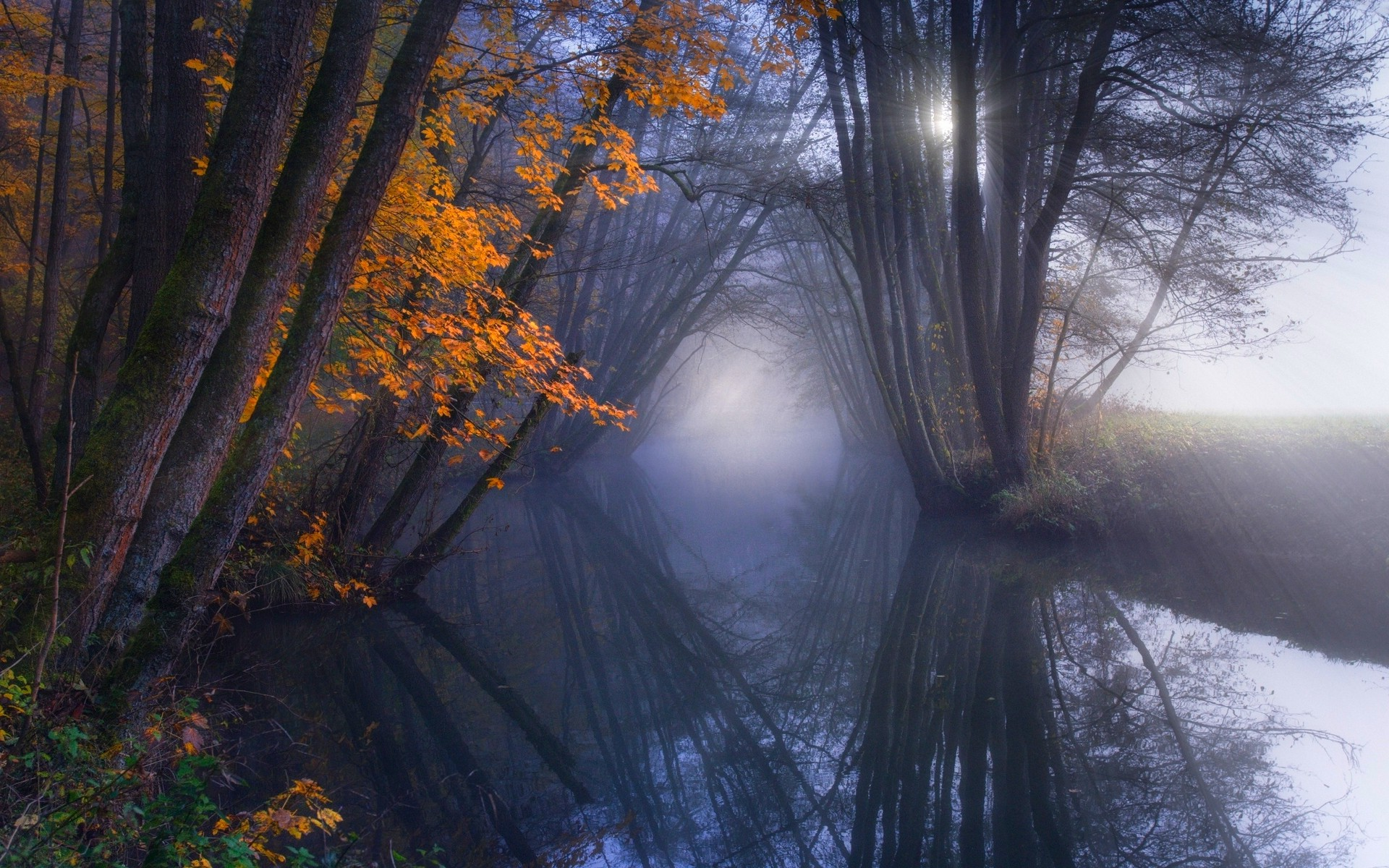 Fall Screen Wallpaper Nature Landscape Reflection Mist Fall Forest River