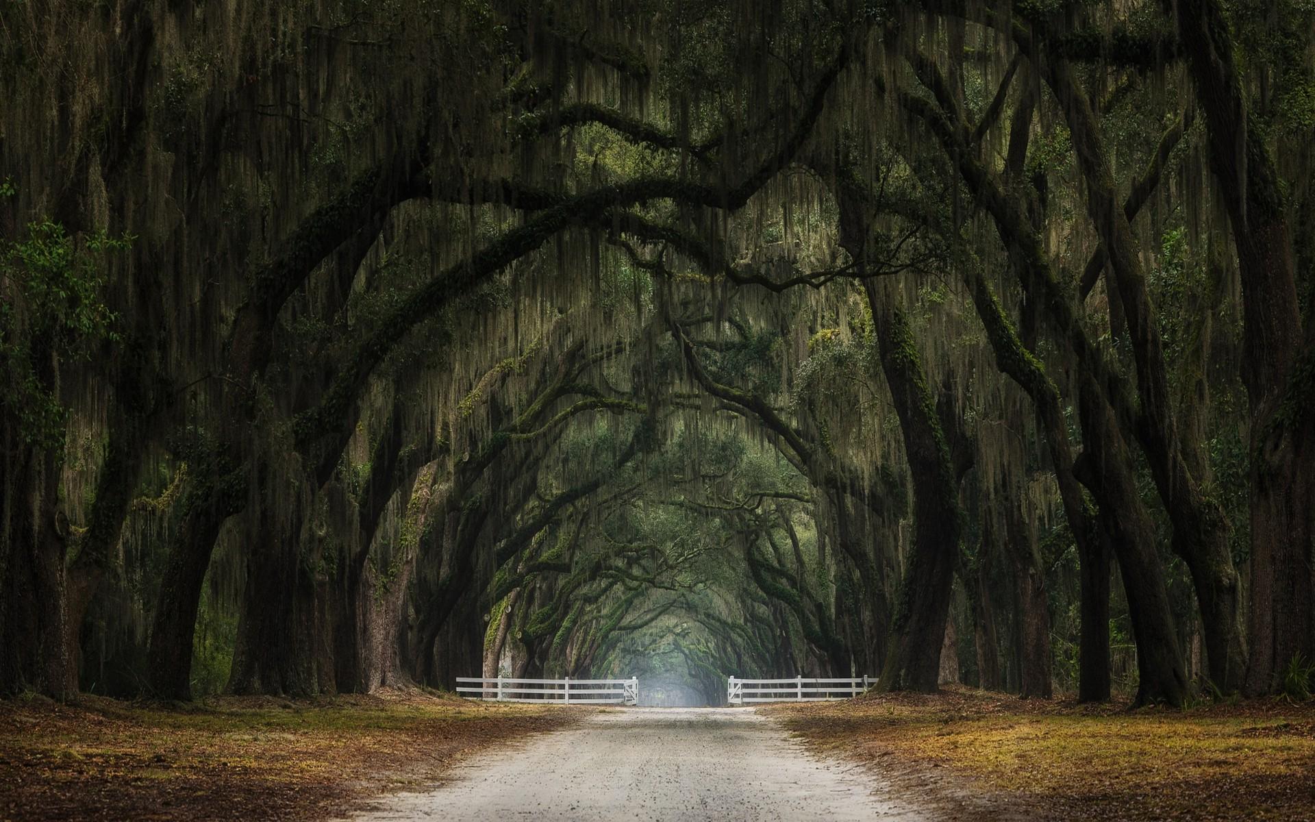 Jungle Animal Wallpaper Nature Landscape Oak Trees Gates Tunnel Leaves Dirt