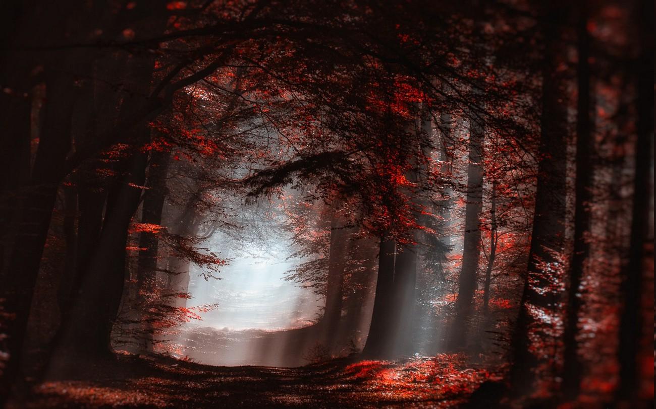 Widescreen Desktop Wallpaper Fall Landscape Nature Atmosphere Forest Mist Sun Rays