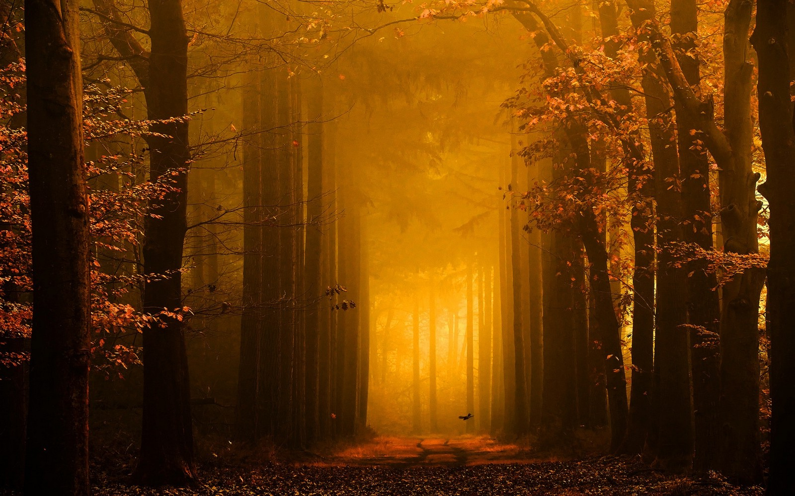 Fall Leaves Pathway Computer Wallpaper Landscape Nature Forest Path Leaves Trees Mist