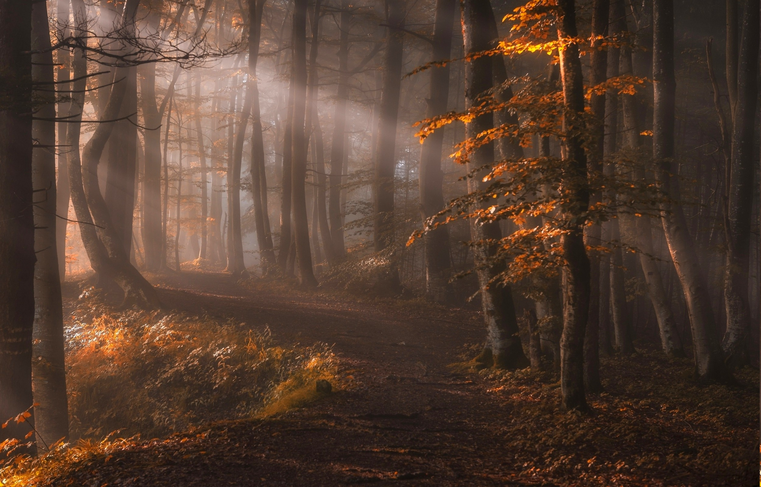 Fall Desktop Wallpaper 2500x1600 Nature Landscape Sun Rays Forest Path Leaves Trees