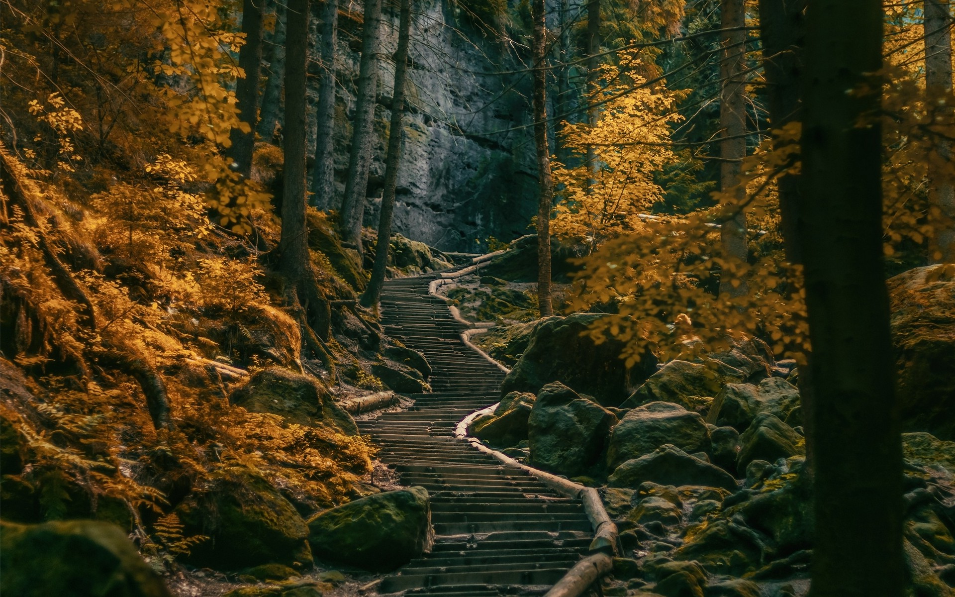 Free Full Screen Fall Wallpaper Path Stairs Dark Forest Germany Nature Landscape