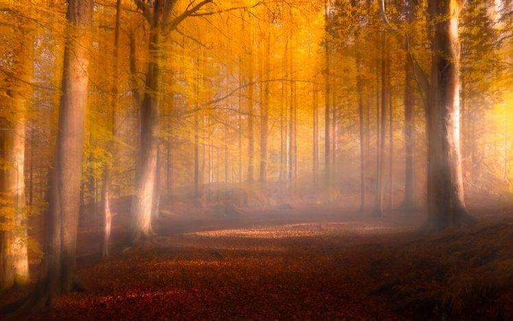 Full Screen Desktop Fall Leaves Wallpaper Nature Landscape Fall Leaves Forest Sunrise Mist