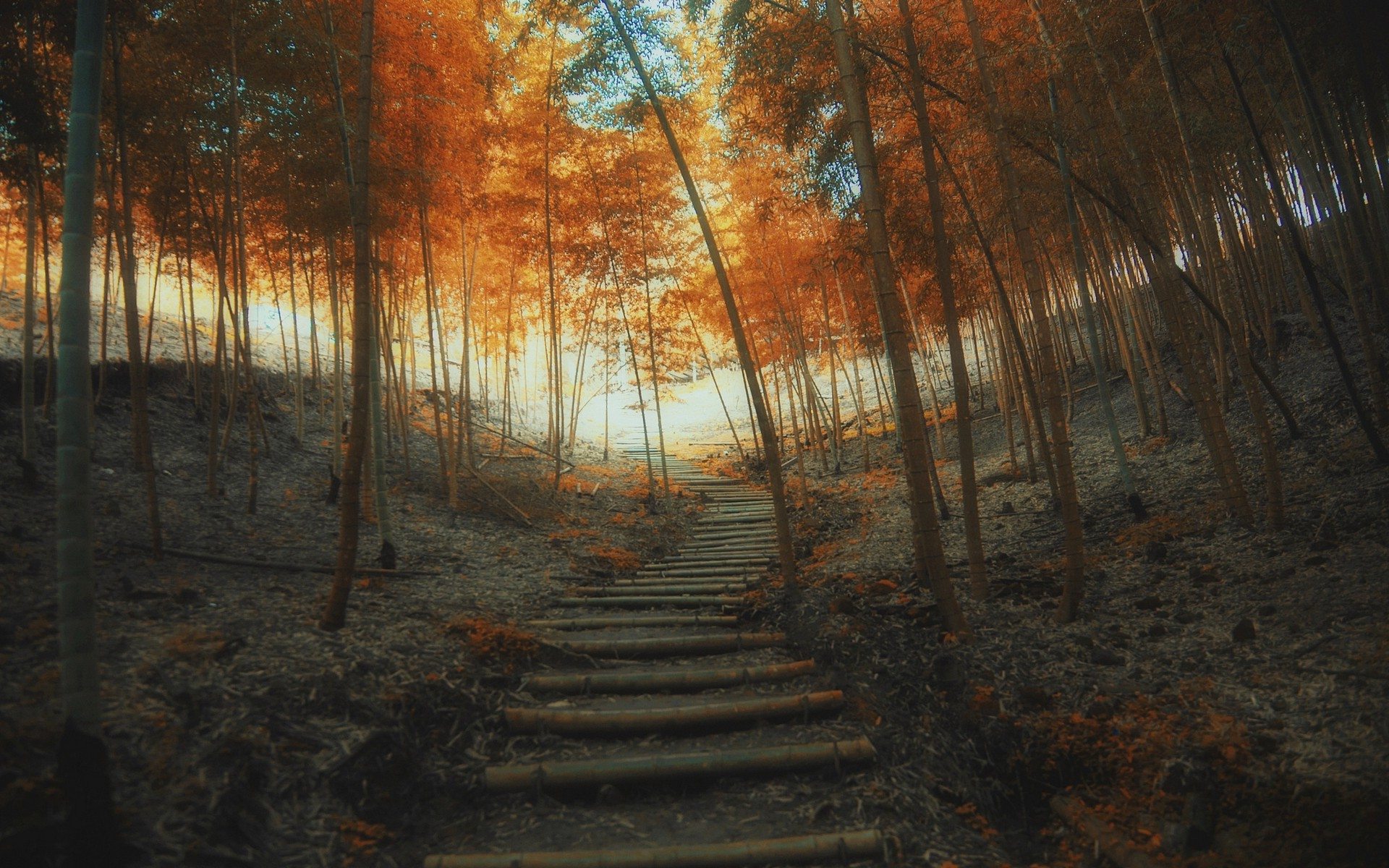 Fall Trees Wallpaper For Desktop Nature Landscape Path Fall Stairs Trees Bamboo Mist