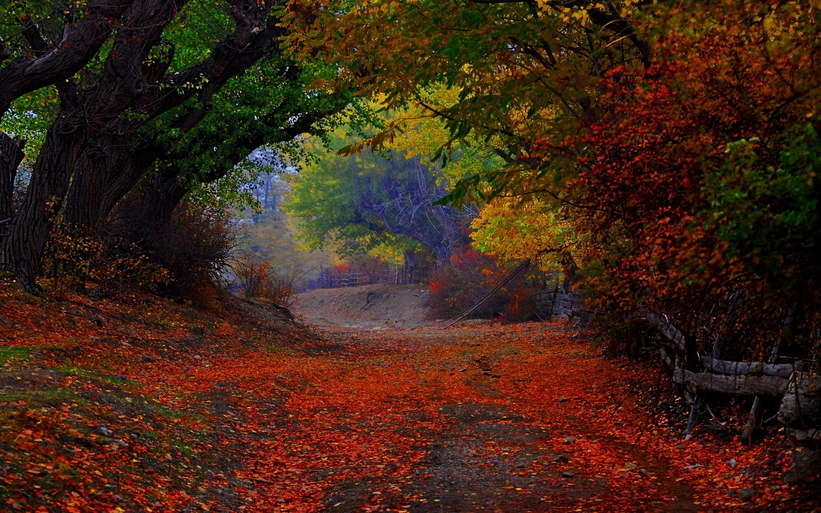 Retro Fall Computer Wallpaper Nature Landscape Colorful Path Trees Fence Leaves