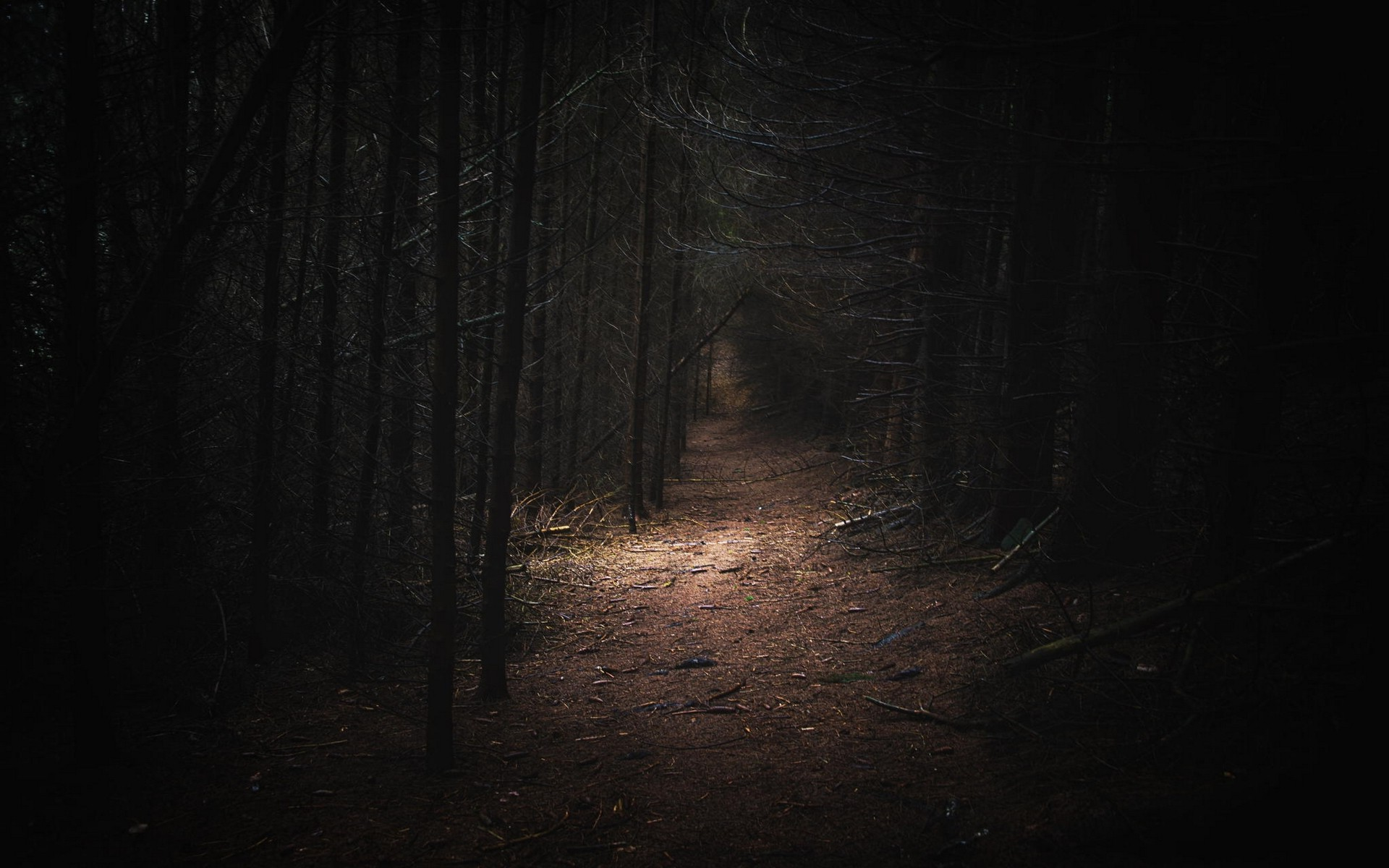 Wampire Moon Wallpaper Desktop 3d Nature Landscape Dark Forest Germany Path Daylight