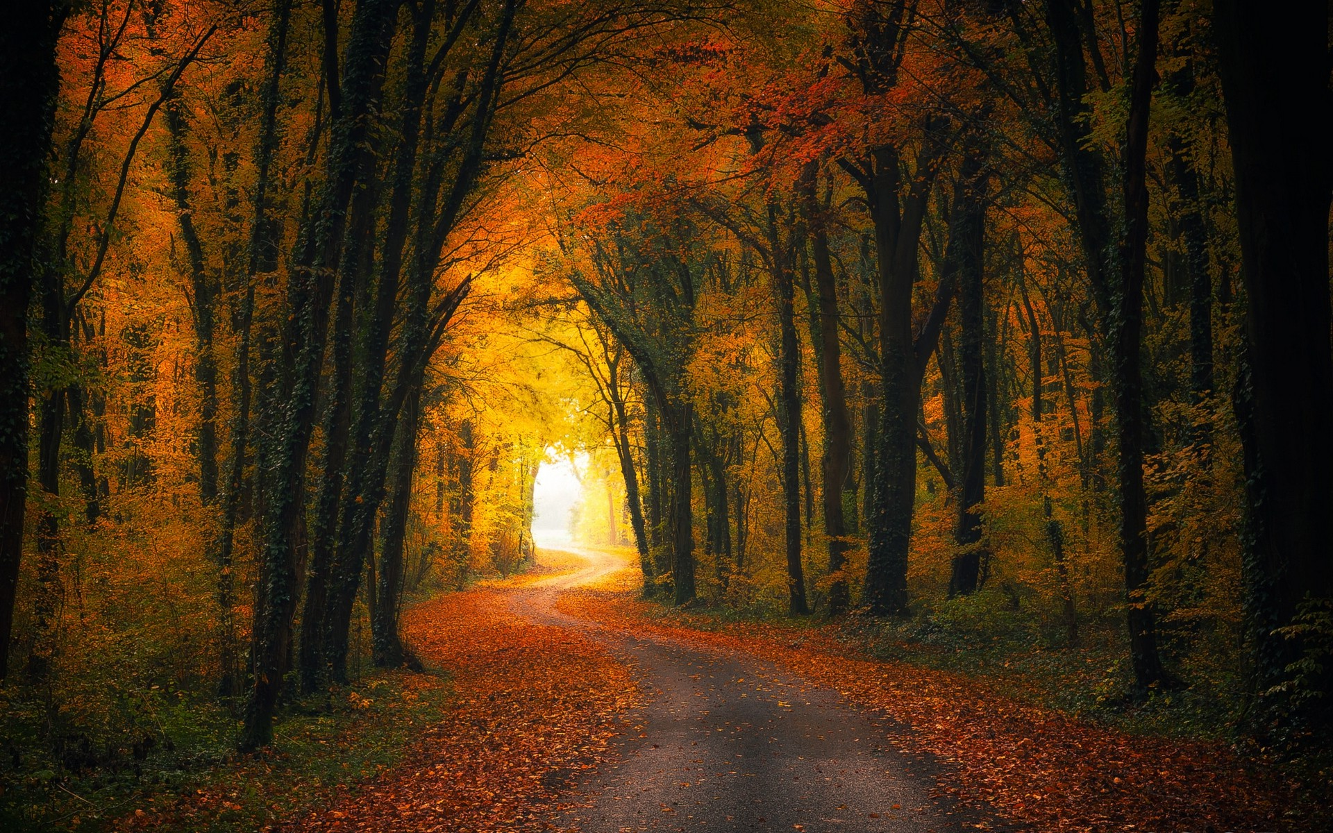 Nature Wallpaper Autumn Fall 1600x1200 Nature Landscape Fall Road Forest Leaves Shrubs
