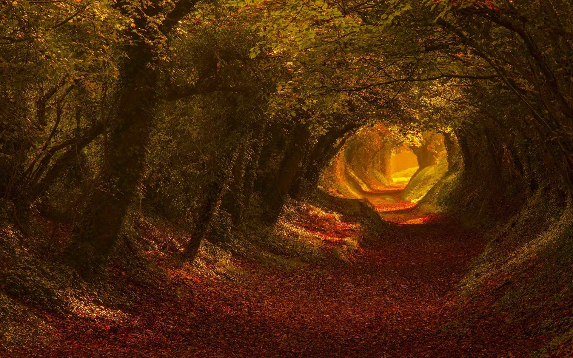 Free Desktop Wallpaper Fall Foliage Nature Trees Fall Leaves Tunnel Sunlight Landscape