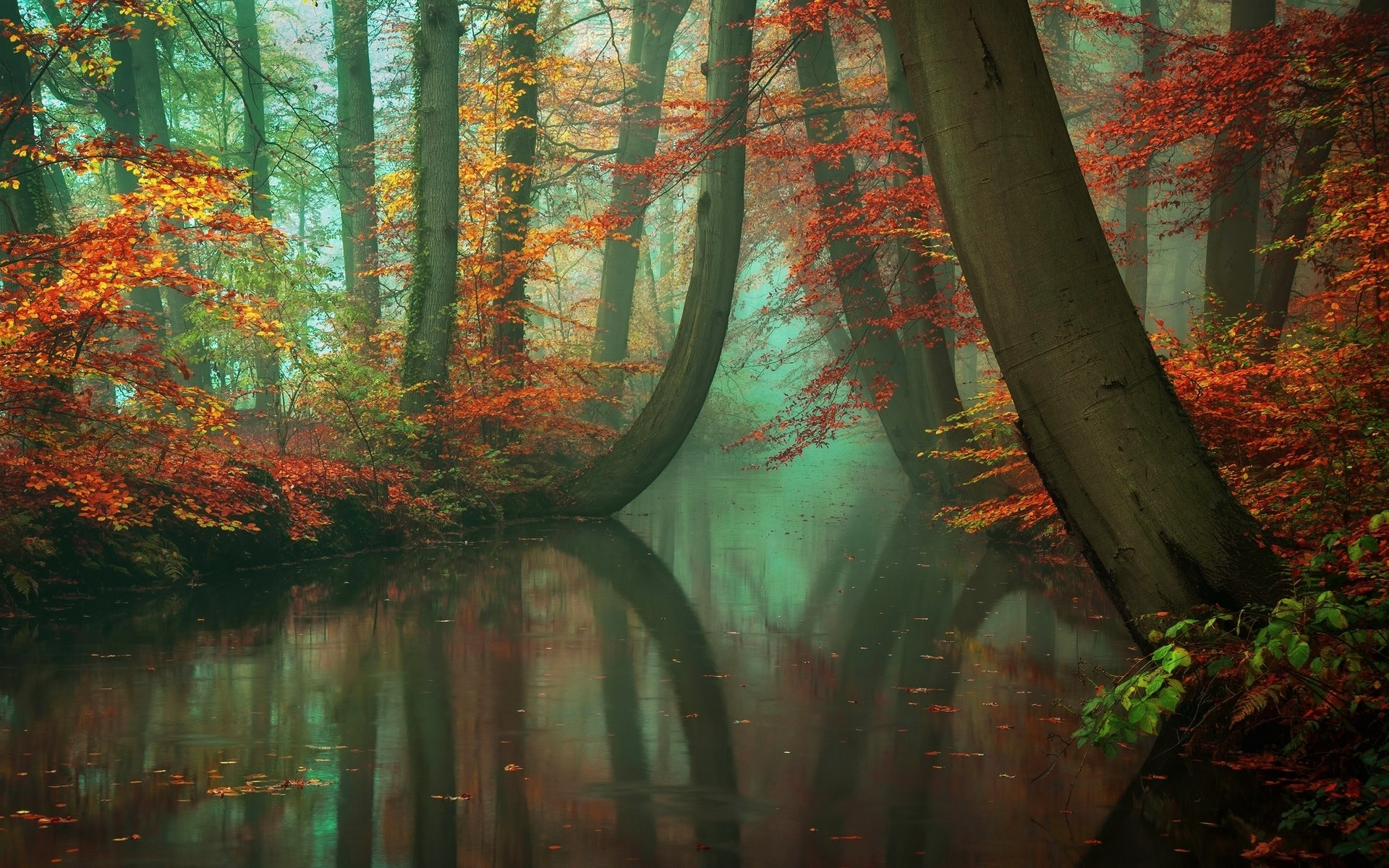 Full Screen Desktop Fall Leaves Wallpaper Nature Landscape Mist Forest Fall River Reflection