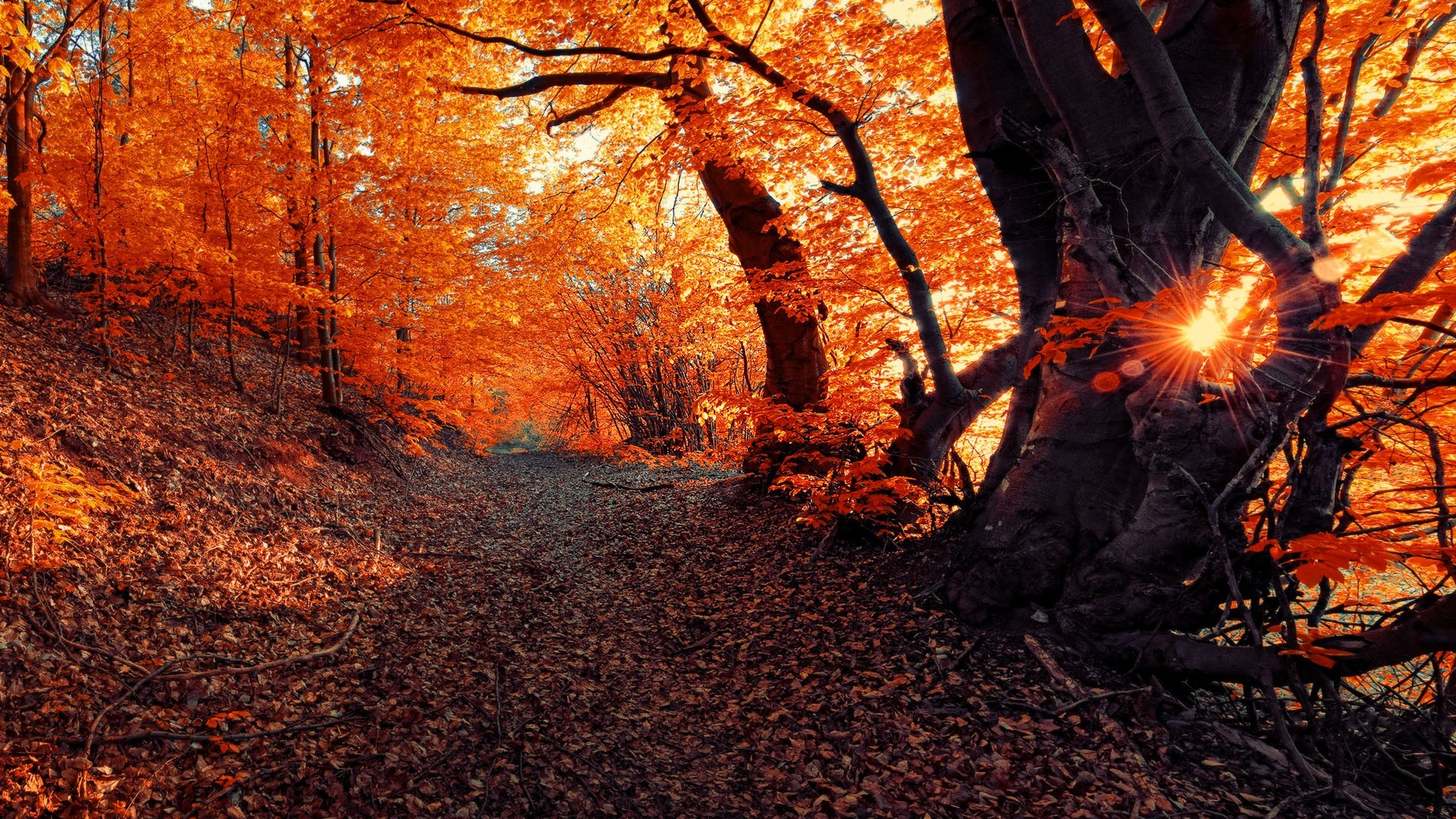 Falling Leaves Animated Wallpaper Landscape Fall Seasons Forest Sunset Nature