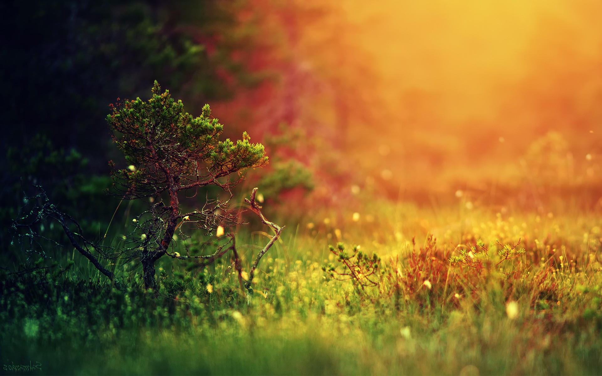 Fall In Love Couples Wallpapers Landscape Depth Of Field Grass Blurred Nature Trees