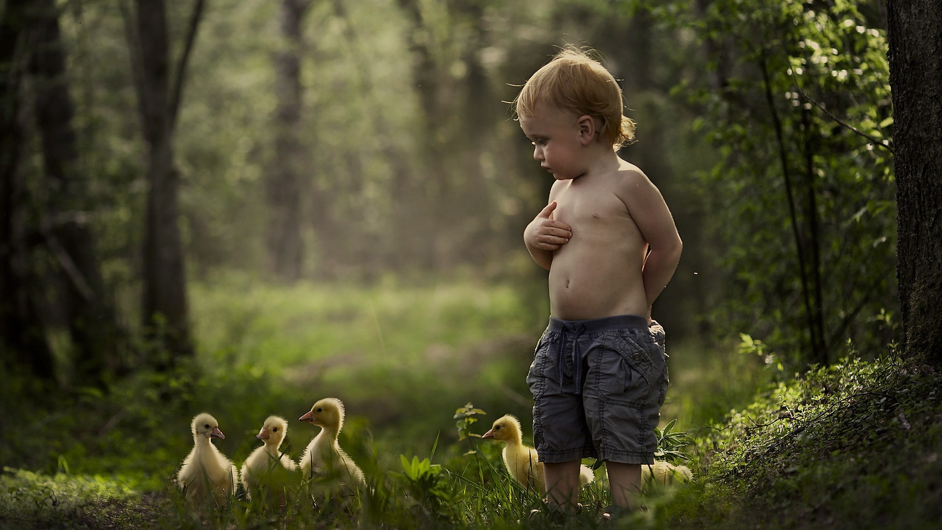 Cute Duck Wallpapers Children Geese Shirtless Baby Animals Birds Forest