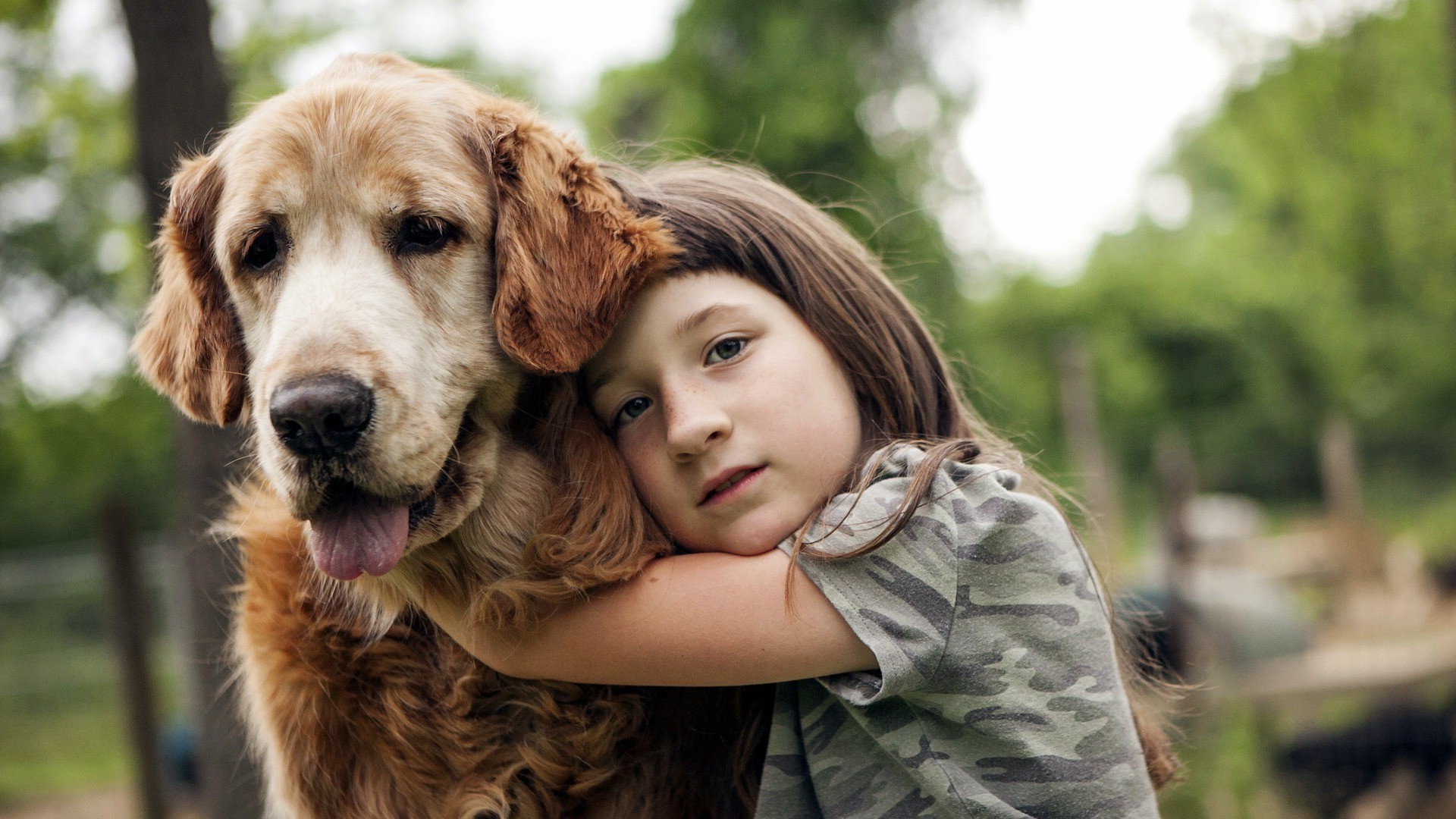 Wallpaper Perritos 3d Animals Dog Hugging Children Wallpapers Hd Desktop
