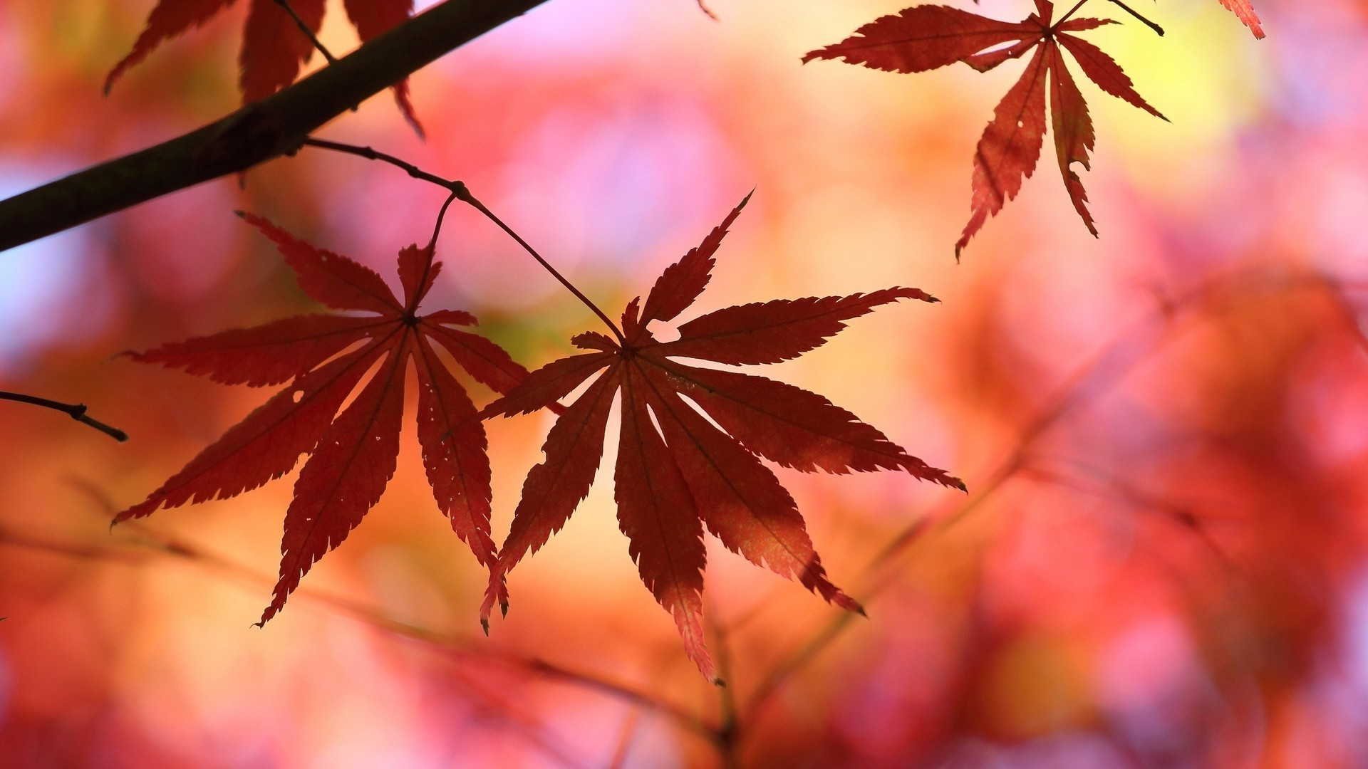 The Fall Movie Wallpaper Leaves Nature Fall Blurred Wallpapers Hd Desktop And
