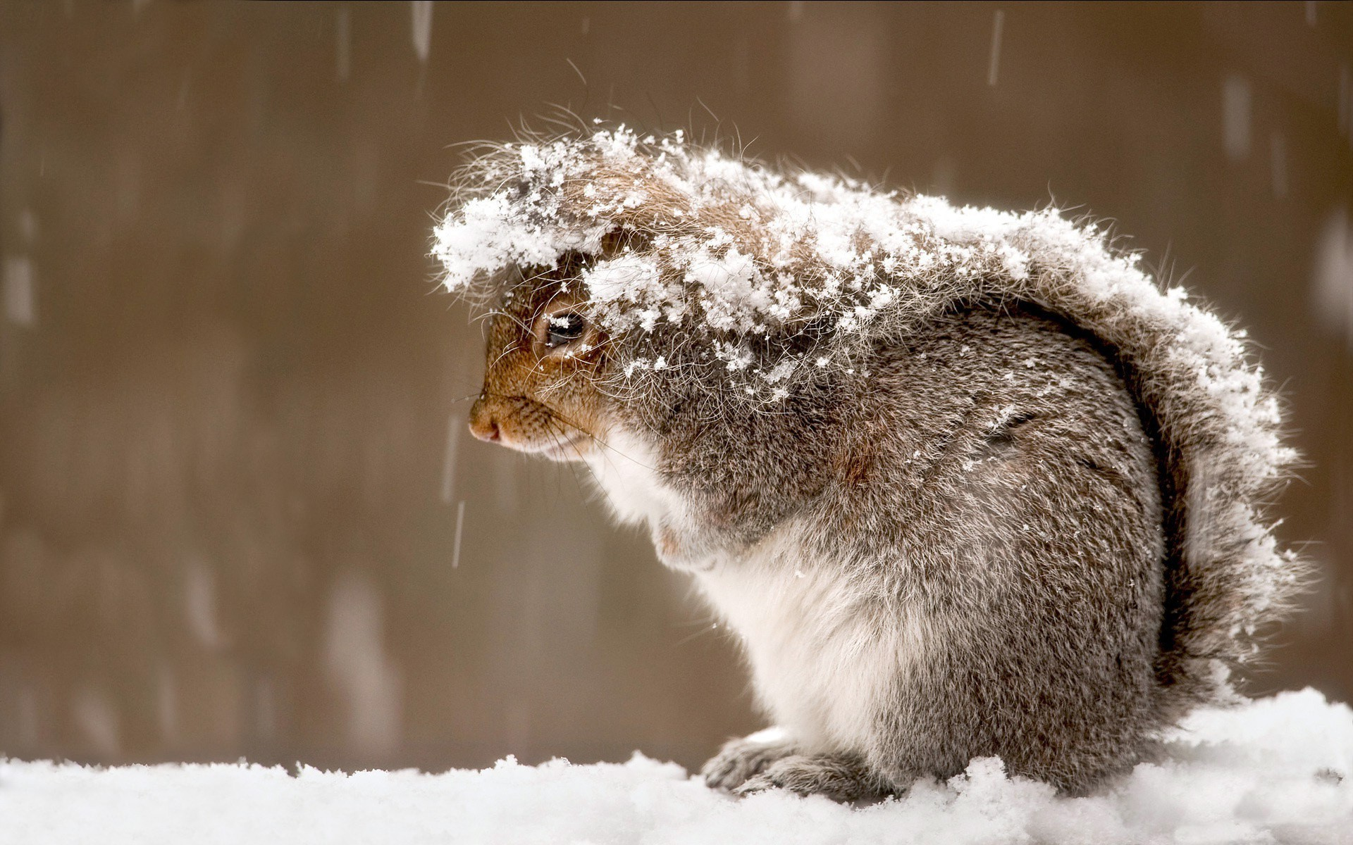 Wallpaper Hd For Desktop Full Screen Cute Baby Photography Squirrel Animals Snow Wallpapers Hd