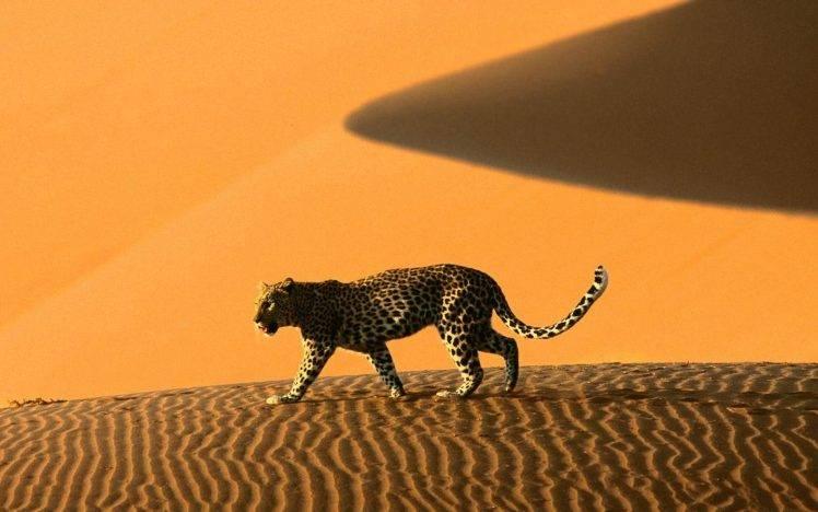 The Cheetah Girls Wallpaper Namibia Sand Dune Leopard Animals Wallpapers Hd