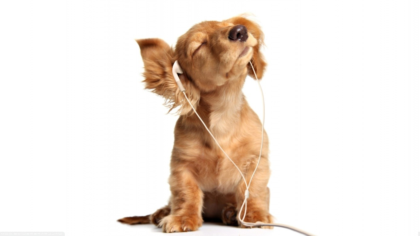 Cute Pet Animals Wallpapers Earphones Dog Animals Baby Animals White Background