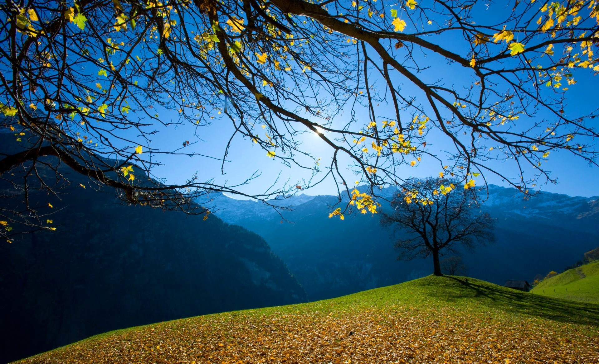 Free Wallpaper Fall 1600x900 Nature Trees Hill Branch Fall Leaves Mountain