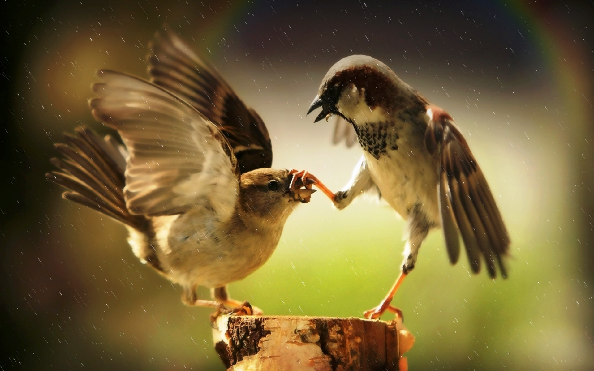 Angry Bird Space Wallpaper 3d Birds Animals Sparrows Rainbows Rain Humor Wallpapers
