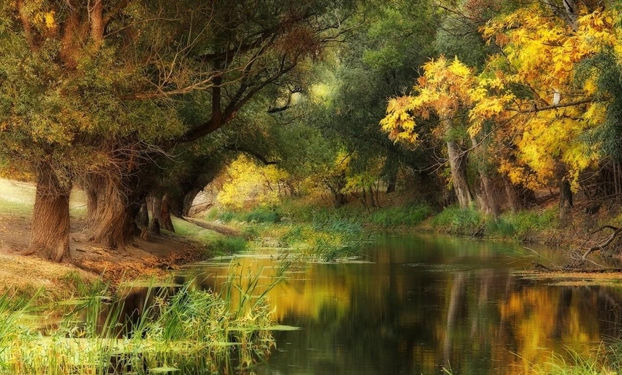 Wallpaper Anime Fall 2016 Hungary Fall River Trees Yellow Green Water Nature