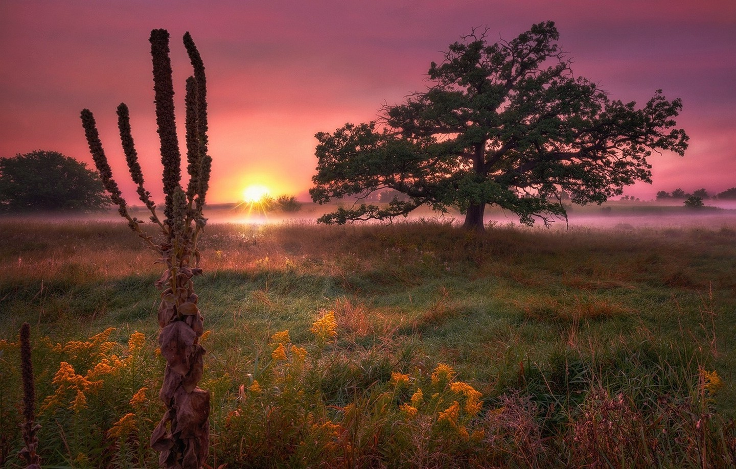 Pink Animal Wallpaper Trees Field Sunrise Wildflowers Mist Grass Morning