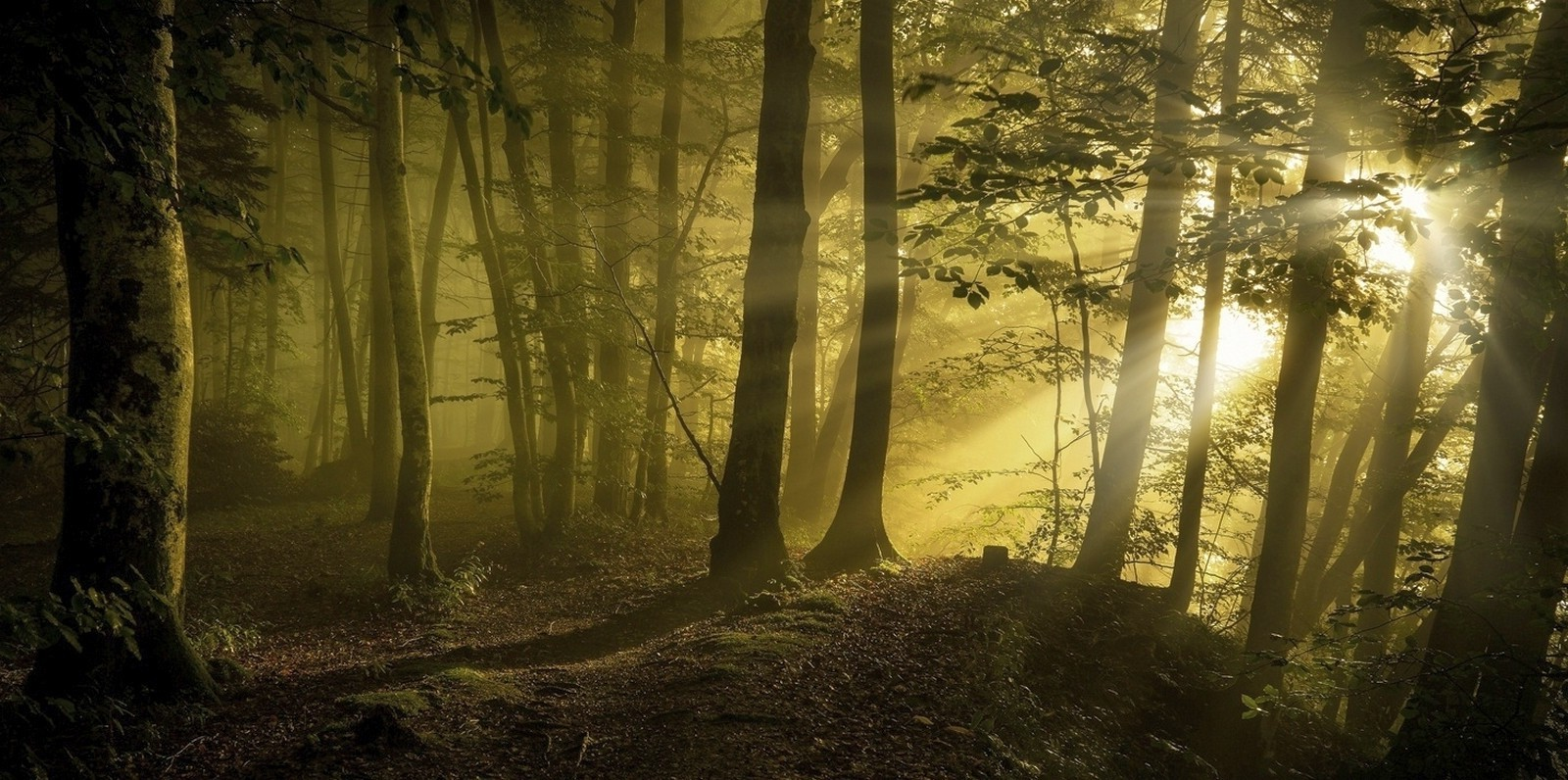 Fantasy Girl Wallpaper Full Hd Sunrise Sunbeams Forest Path Trees Mist Sunlight