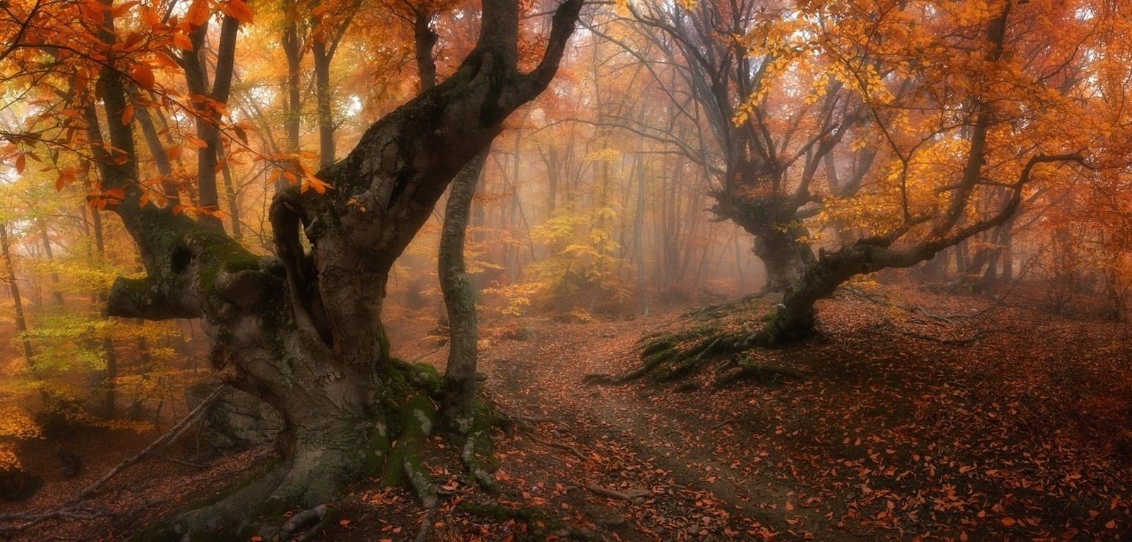 Fall Leaves Hd Desktop Wallpaper Forest Magic Fall Trees Leaves Mist Path Roots