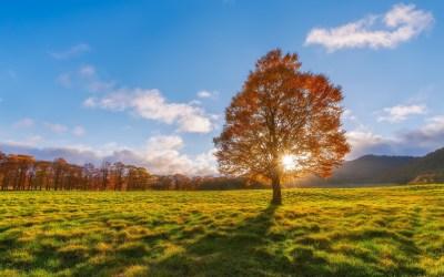 nature, Landscape Wallpapers HD / Desktop and Mobile Backgrounds