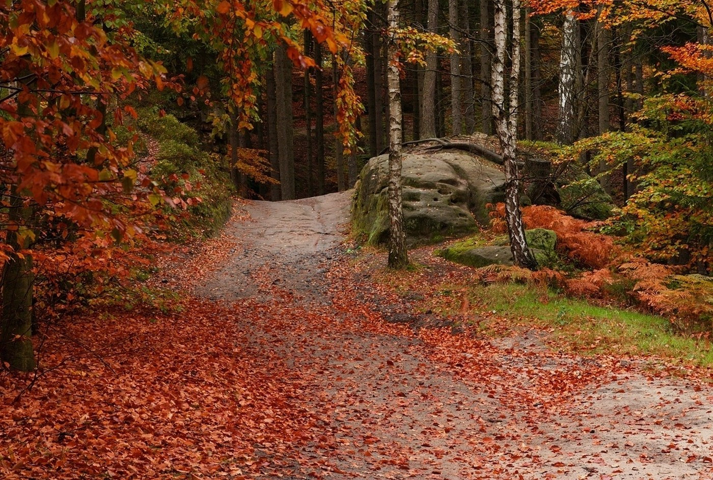 Full Screen Desktop Fall Leaves Wallpaper Forest Path Leaves Fall Trees Red Green Nature