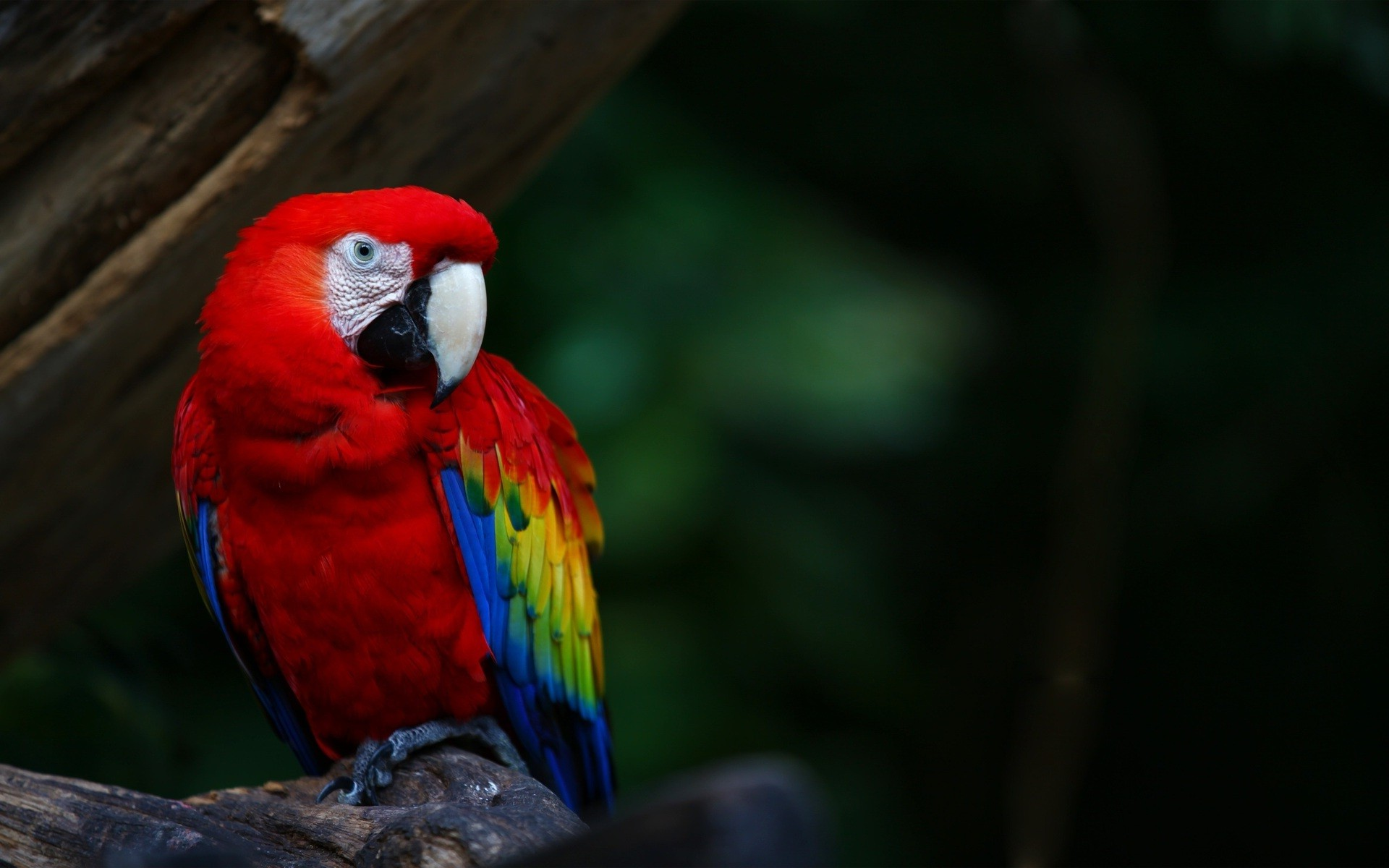 Cute Parakeet Wallpaper Animals Wildlife Nature Birds Macaws Parrot