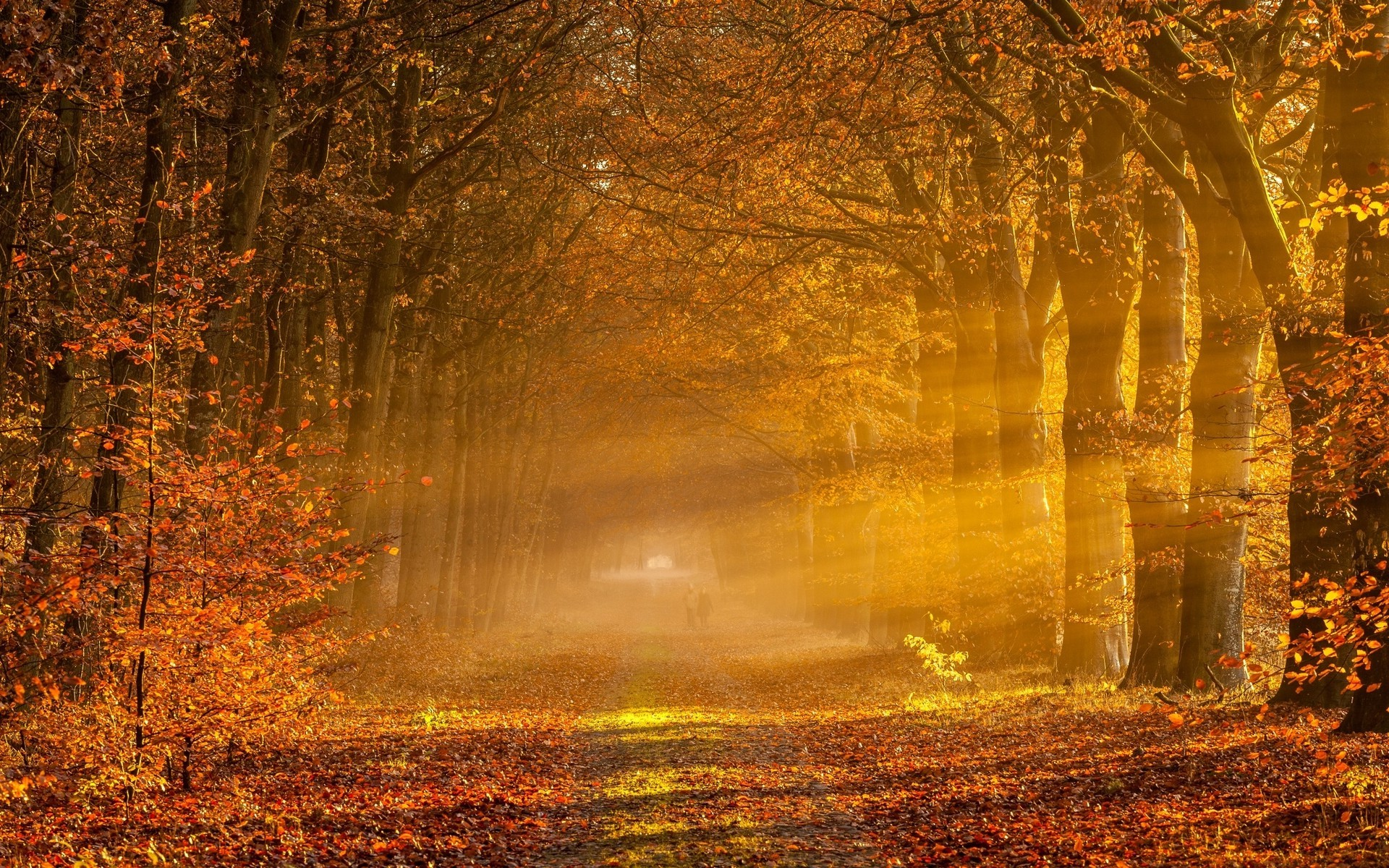Nature Wallpaper Autumn Fall 1600x1200 Nature Landscape Sunrise Sun Rays Fall Gold Leaves