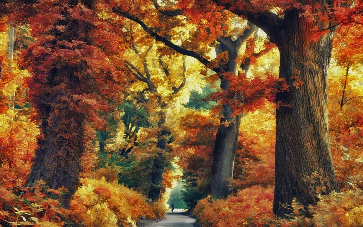 Autumn Fall Wallpaper 1600x900 Nature Landscape Forest Road Fall Trees Colorful