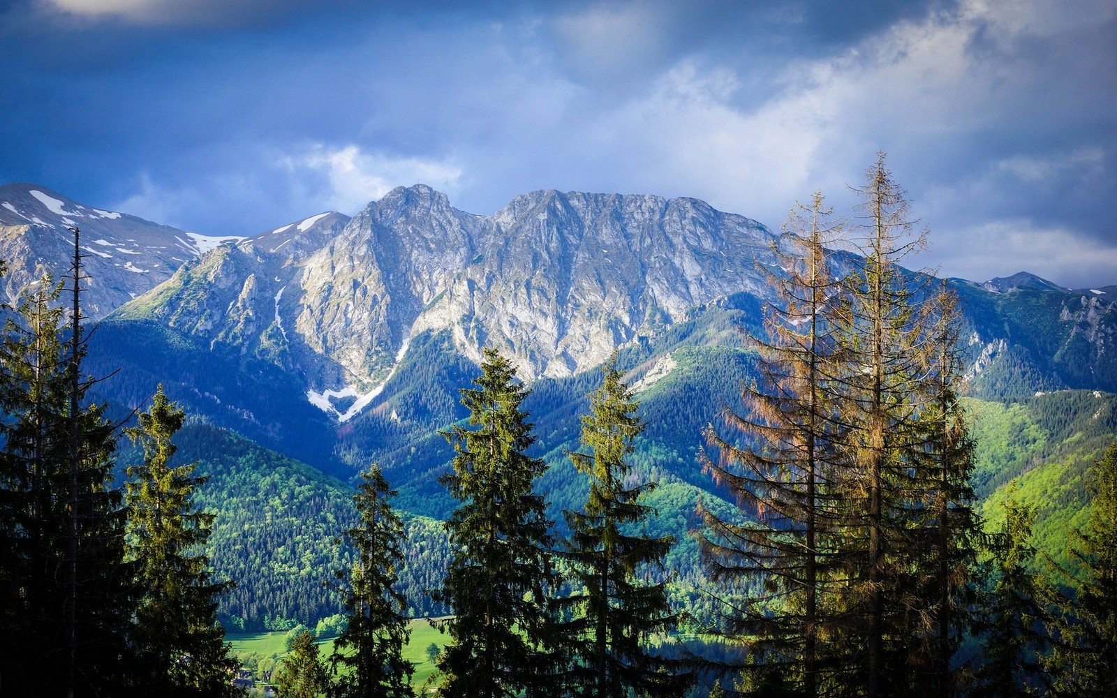 3d Wallpapers For Pc 1920x1080 Free Download Nature Landscape Mountain Forest Carpathians Trees