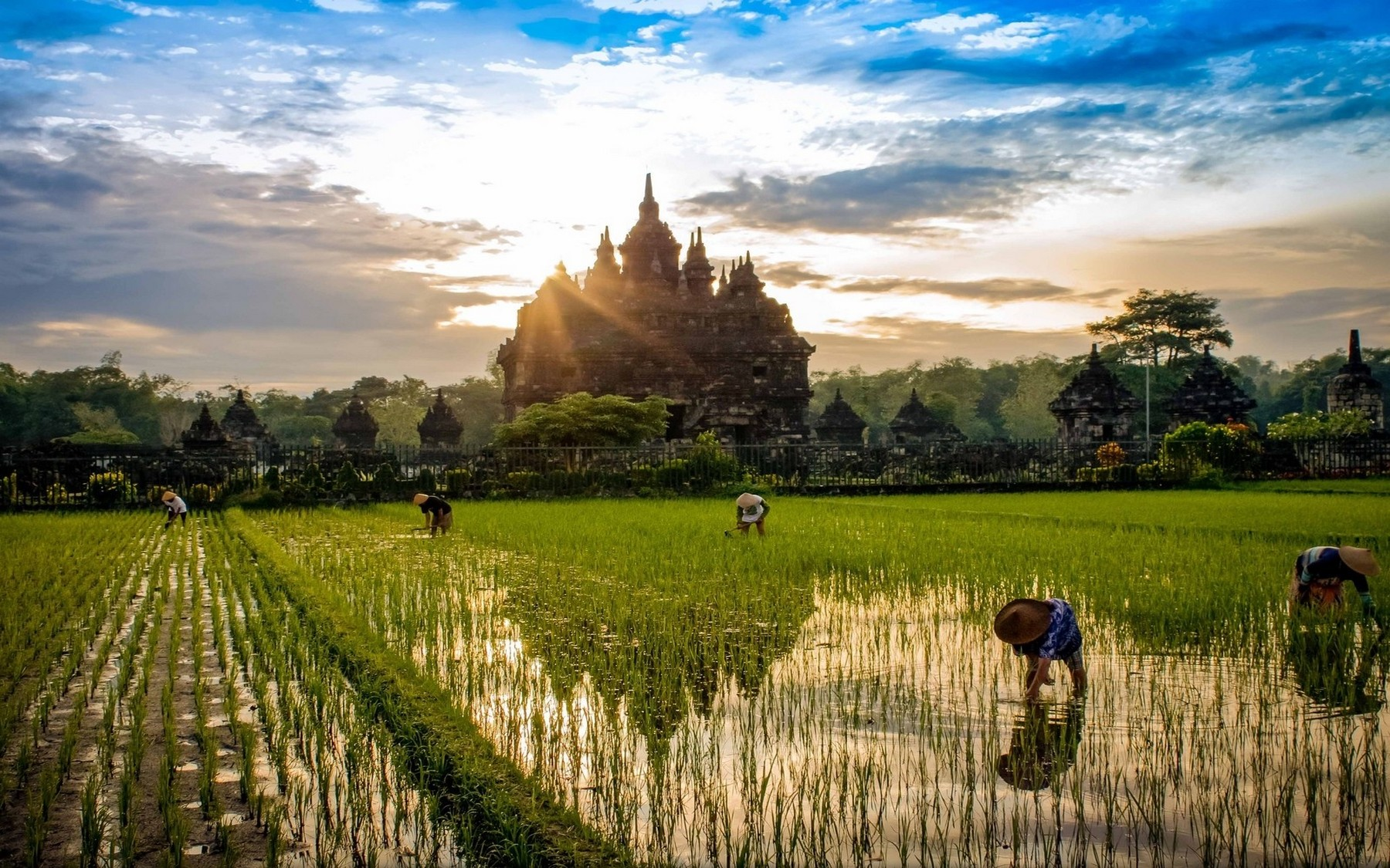4k Wallpaper 3d National Geographic Nature Landscape Sunrise Rice Paddy Temple Buddhism