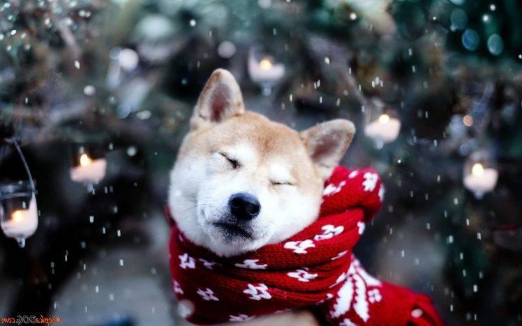 Shiba Inu Cute Desktop Wallpaper Dog Shiba Inu Snow Animals Wallpapers Hd Desktop And