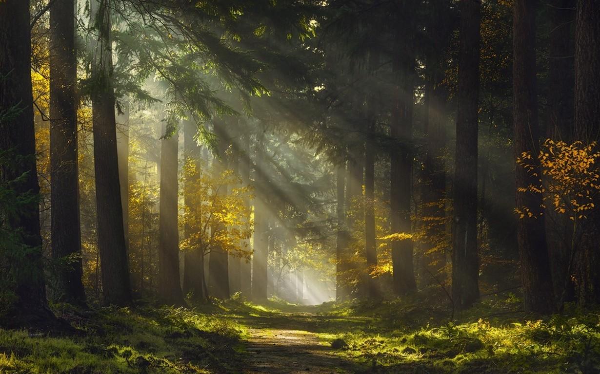Fall Fairy Wallpaper Sun Rays Morning Forest Path Mist Trees Grass